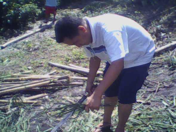 """Kuya RC"" preparing bamboo posts for temporary perimeter fencing"